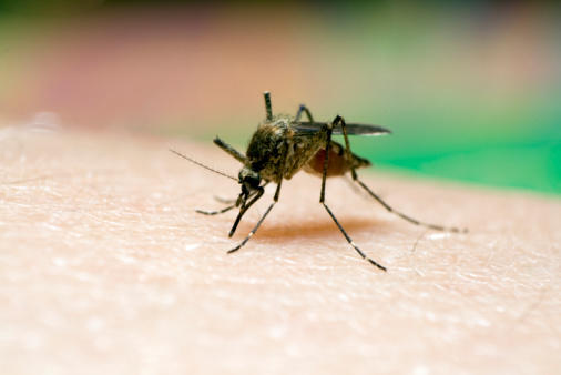RAW: Dr  Colin Lee of Public Health Ontario discusses West Nile