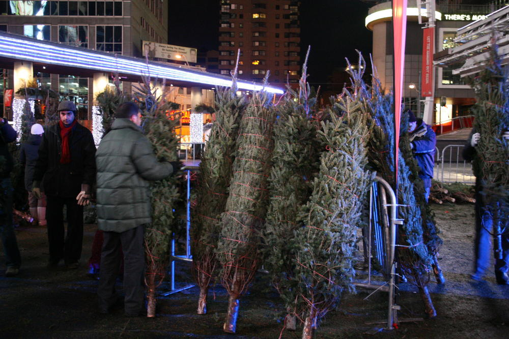 680News, Citytv team up for charity Christmas tree sale ...