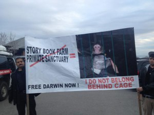 Protesters, including Darwin's former owner, gathered outside a Toronto Animal Services office on Wednesday, Dec. 19, 2012, in an effort to get him back.