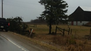 A destroyed tree on the side of the road in the Shelburne area.