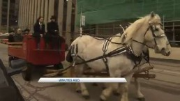 Sarah Thomson arrives at City Hall on horse-drawn carriage