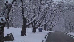 Winter weather returned to the GTA