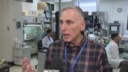 Chikungunya virus sweeping Caribbean islands