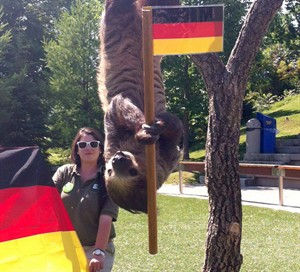 Bob the sloth holds a German flag at the Toronto Zoo on July 11, 2014. THE CANADIAN PRESS/Anne-Marie Vettorel