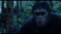 680News' Leslie James movie reviews: Dawn of the Planet of the Apes, Life Itself