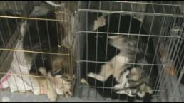 Toronto team hopes Attawapiskat clinic will save dogs