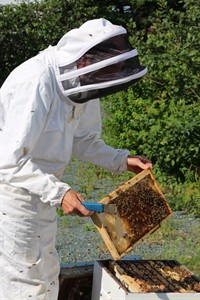 """Paradise, N.L., beekeeper Aubrey Goulding, operator of Paradise Farms Inc., works with one of his hives recently. Newfoundland's healthy honeybees are an increasing draw for researchers in the race to understand why colonies across much of the globe are struggling or dying off."""" THE CANADIAN PRESS/HO"""