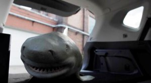 The prosthetic shark used by the Discovery team in a marketing hoax to promote Shark Week. Source: Discovery
