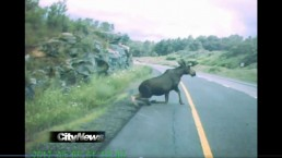 RAW: Dashcam video of vehicle hitting moose on Hwy. 400