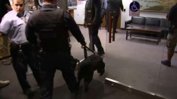 Police dog sweeps Mayor Ford's office after threat