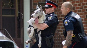 Fire crews and officers arrive to a house engulfed by fire in Vaughan on May 29 and rescued the pets from inside.