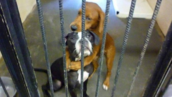 dogs-e1437579207628 - Canines in love - Photos Unlimited