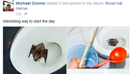 Blog Holy House Guest Batman Bat Greets Toronto Man S Early Morning Toilet Visit