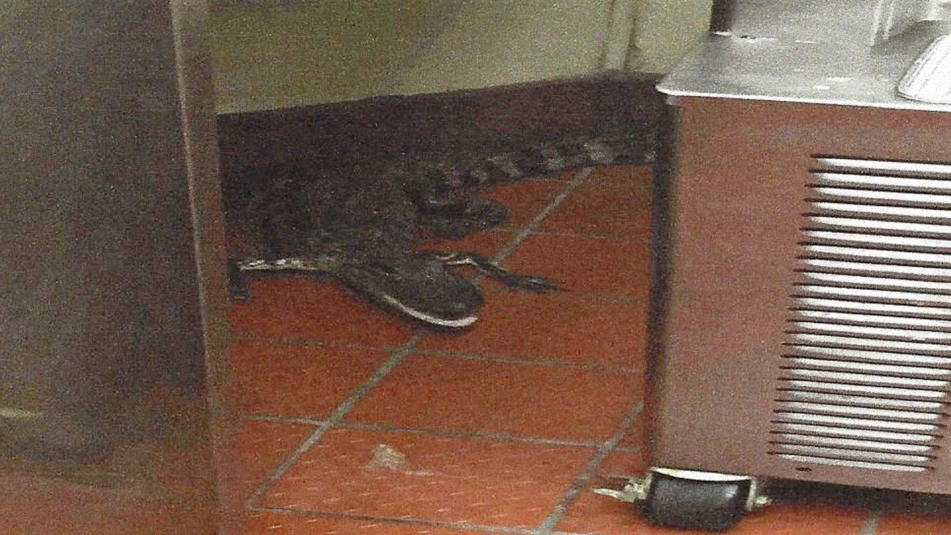 Man accused of tossing gator at drive-thru