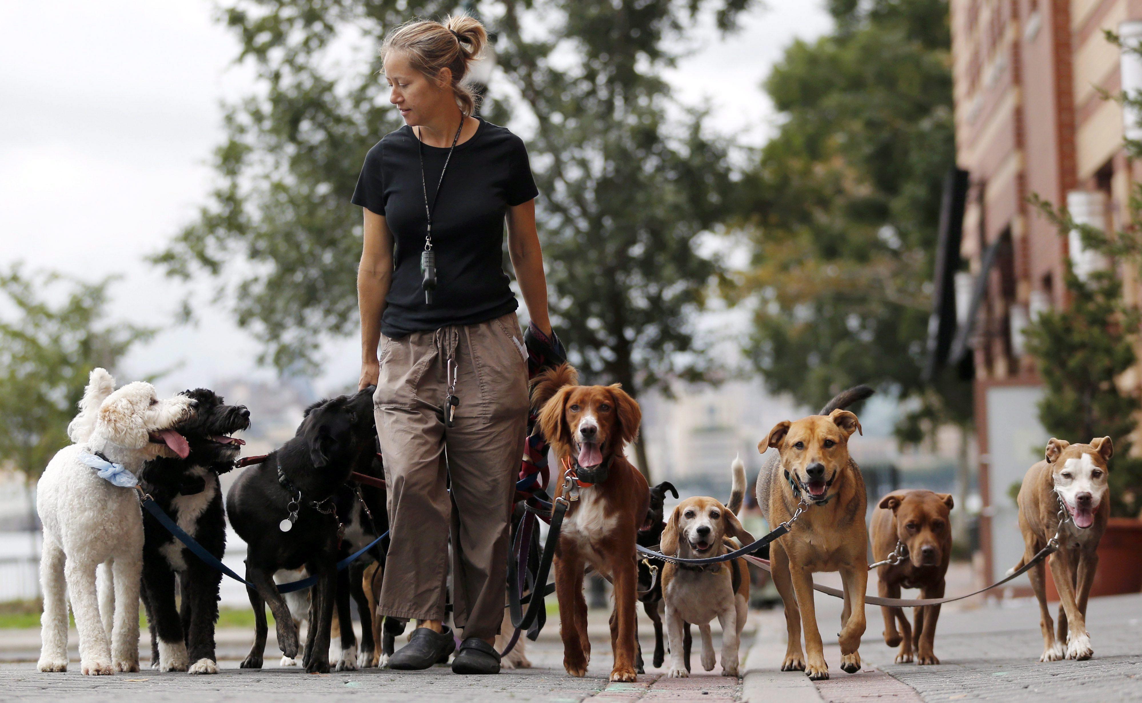 Resultado de imagem para dog walker