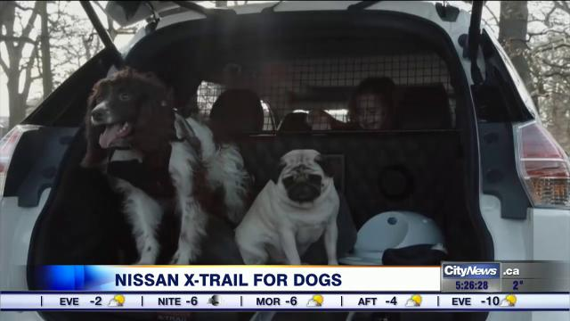 business report nissan releases video of dog friendly car concept video 680 news. Black Bedroom Furniture Sets. Home Design Ideas