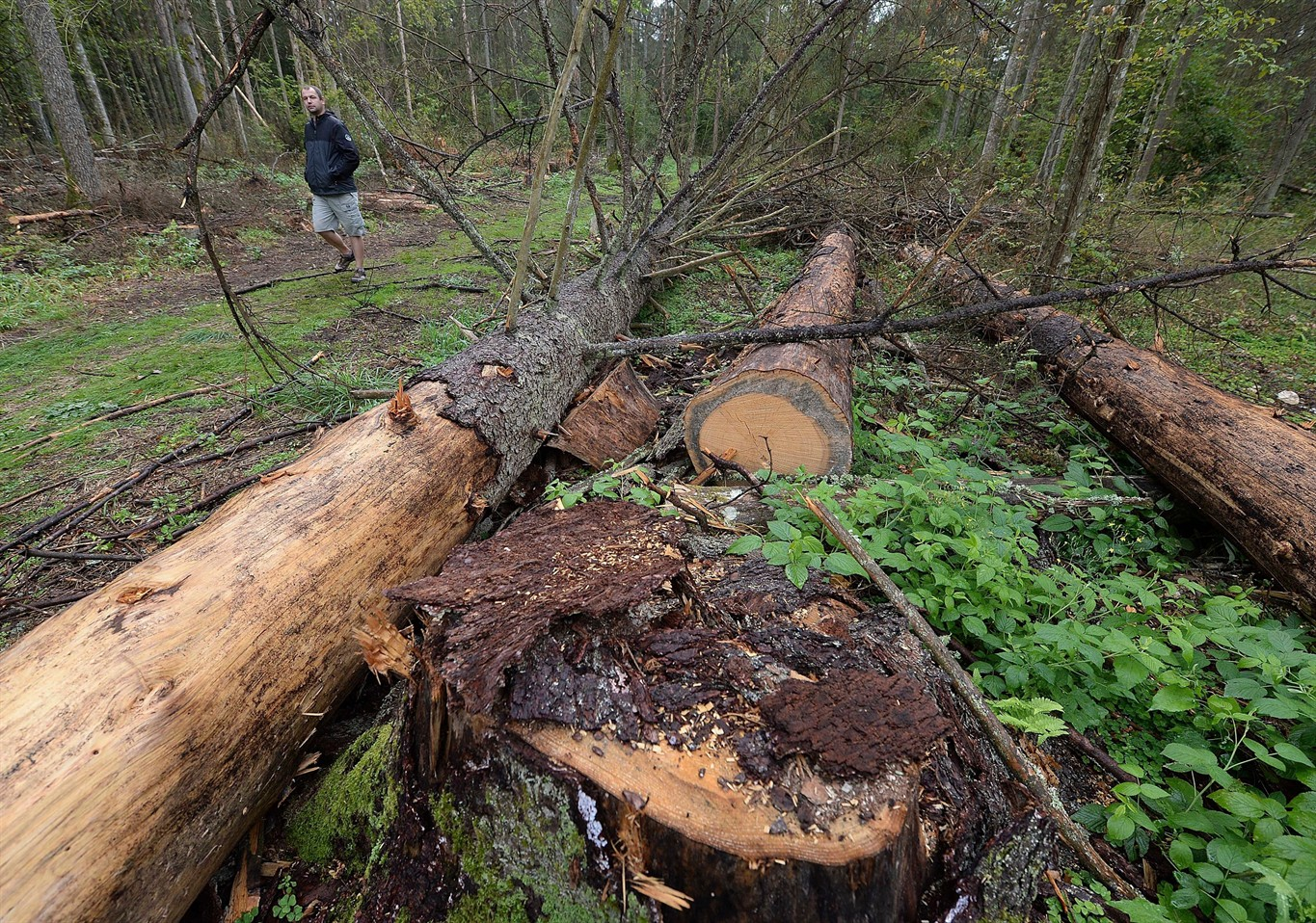 EU Court: Poland's Forest Management Led to Partial Loss of Bialowieza Site