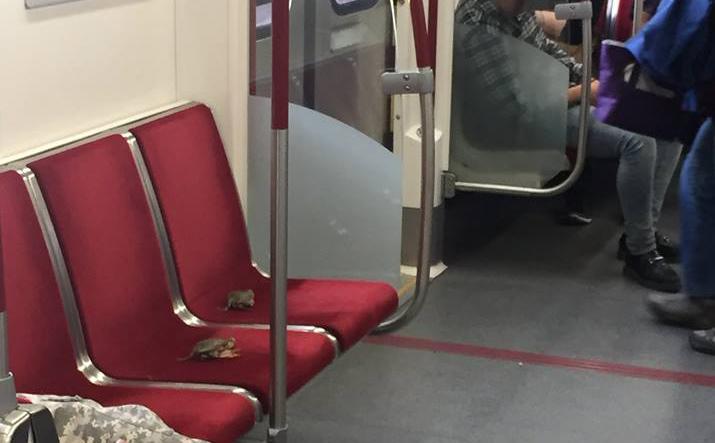 Placing live crabs on Toronto subway seats is 'shellfish,' TTC says