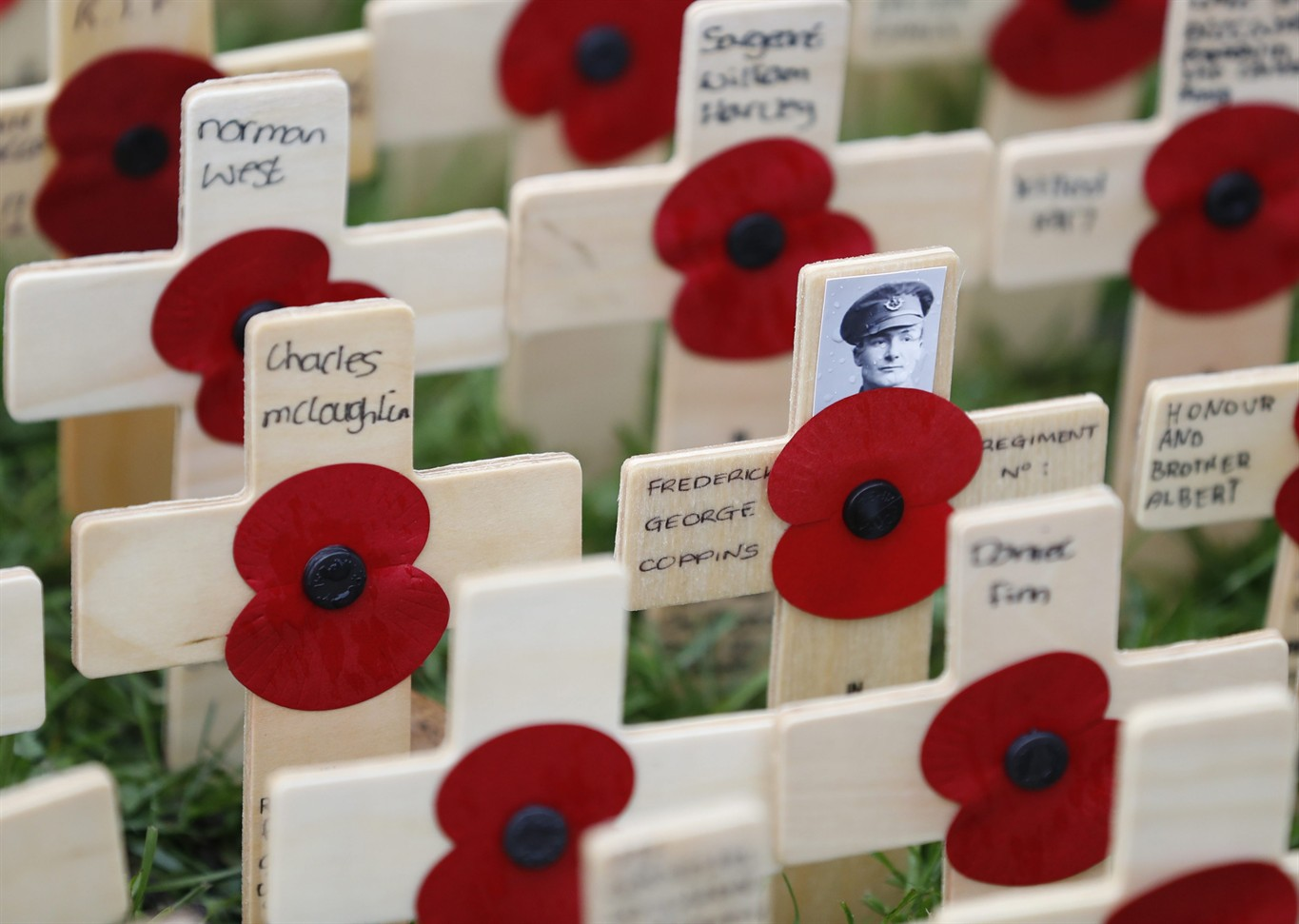 Live coverage of Remembrance Day parade and ceremony on ...
